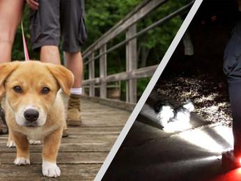 Night Walking-Dangers of Walking the Dog