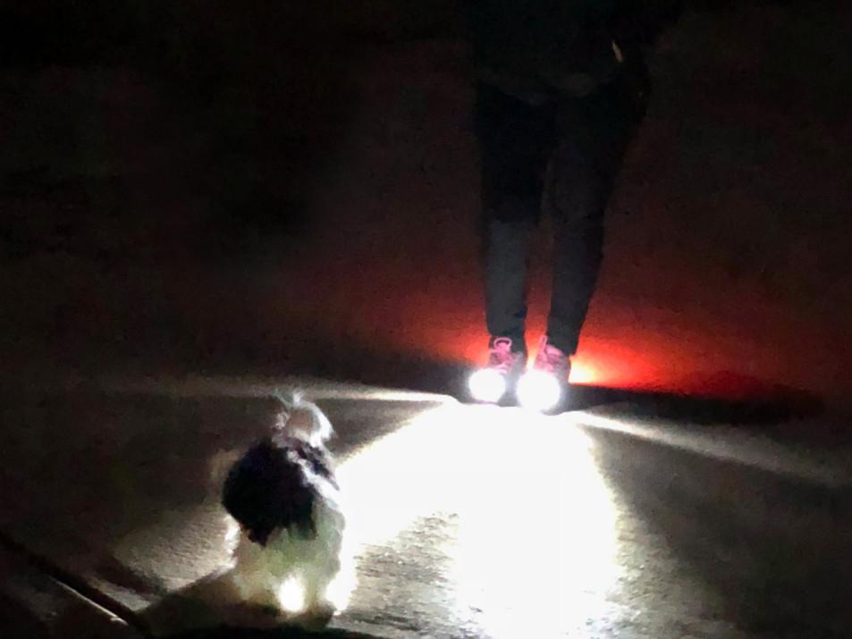 Women's Night Runner Shoes-Dog Walking Safety-1