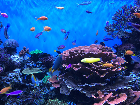 "Mary Miller Chiao ""THE AQUARIUM"" iPhone Photography NFS"