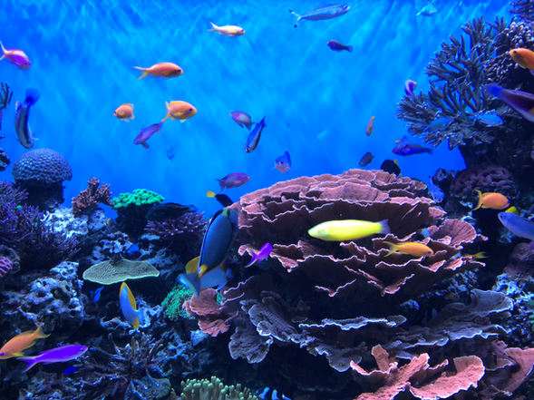 """Mary Miller Chiao """"THE AQUARIUM"""" iPhone Photography NFS"""