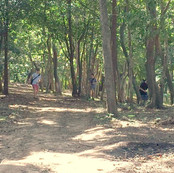 Trail between holes