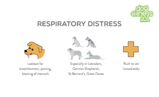 emergency pet care - respiratory distress