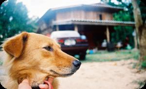 Prepare dog road trip - Dog resting outside car