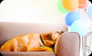 sleepy dog on linen sofa