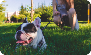 Toilet train an adult dog - Developing habit