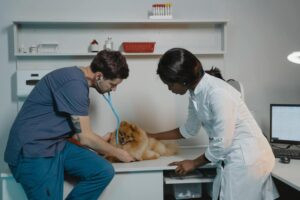 Can-Dogs-Be-Healthy-On-a- Vegetarian-Diet-Vets-Examining-a-Dog