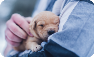Basic dog vaccinations - Puppy