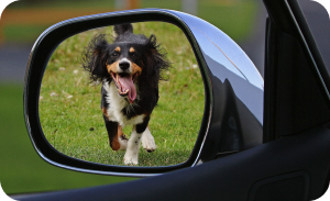 Prepare dog road trip - Dog running around