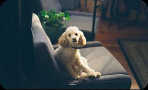 hairy puppy on nylon chair
