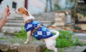 Toilet train an adult dog - Rewarding with food
