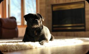 Sitting alone - Dog separation anxiety training