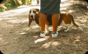 Prepare dog road trip - Going on a walk