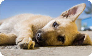 Basic dog vaccinations for street dog