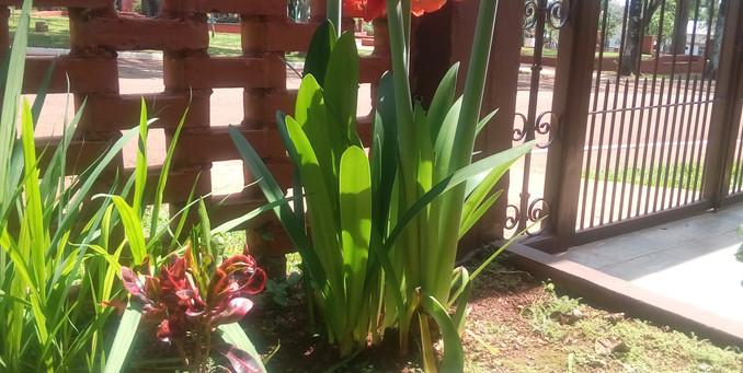 Las maravillas de la primavera/wiosenne cuda