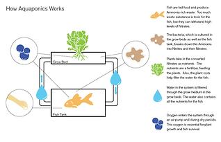 cycle aquaponics.png