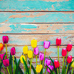 tulips against a wood background