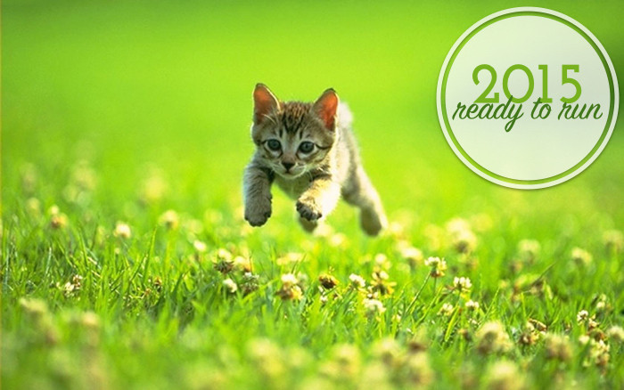 2015_cat_readytorun.jpg.002.jpg.001