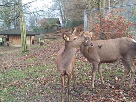 Anschaffung für den Hirschpark