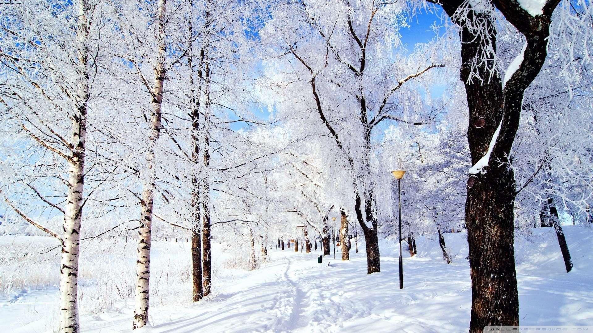 Зимняя сказка в Ереване