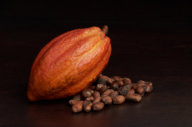 Cacao Bean Pod With Cacao Beans