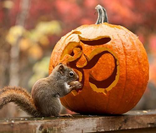 namaste_pumpkin_squirrel.jpg