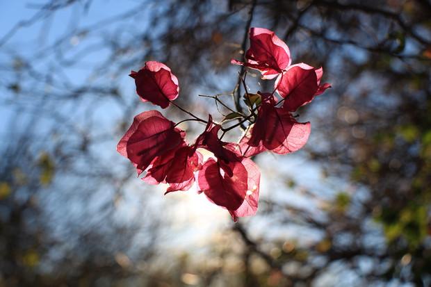 McGregor Country Getaways Flower.jpg