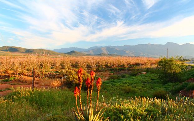 McGregor Country Getaways Aloe.jpg