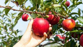 Apple-Trees-A-Fruitful-Primer.jpg