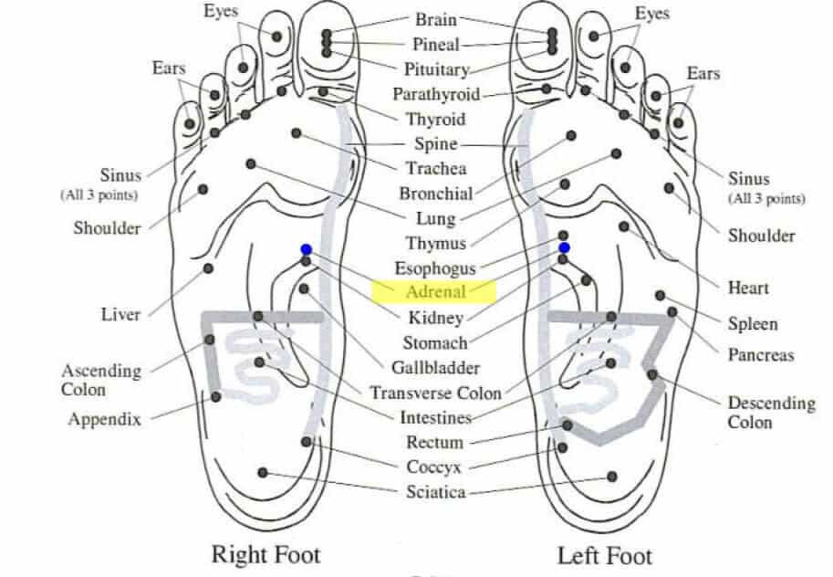 Essential Oils and Adrenal Fatigue in the foot