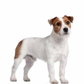 Malý pes zábal + trimování