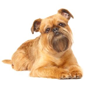 Střední pes zábal + trimovaní