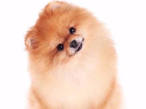 Malý pes zábal + střih