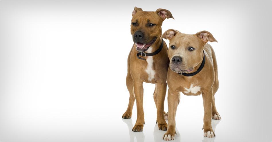 Střední pes wellness