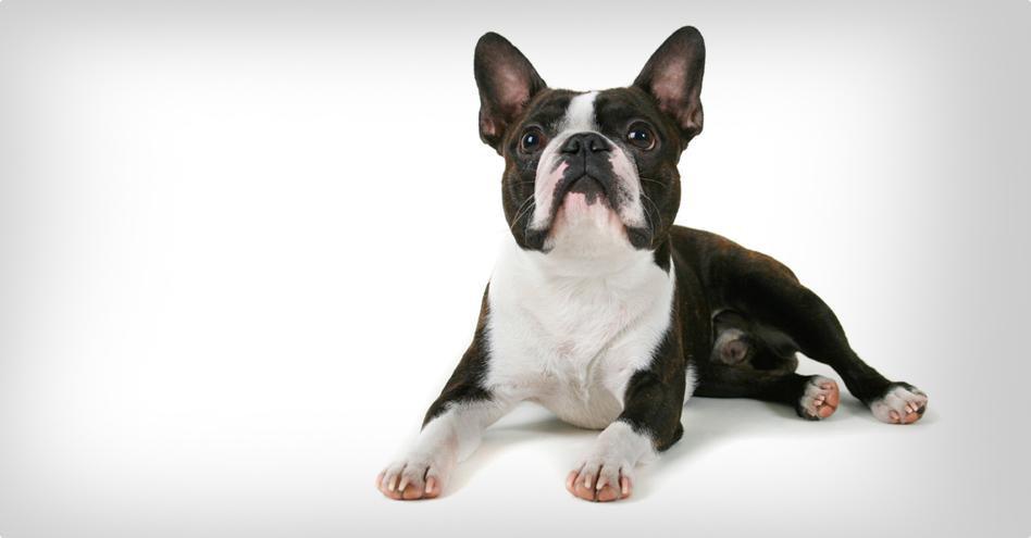 Malý pes wellness