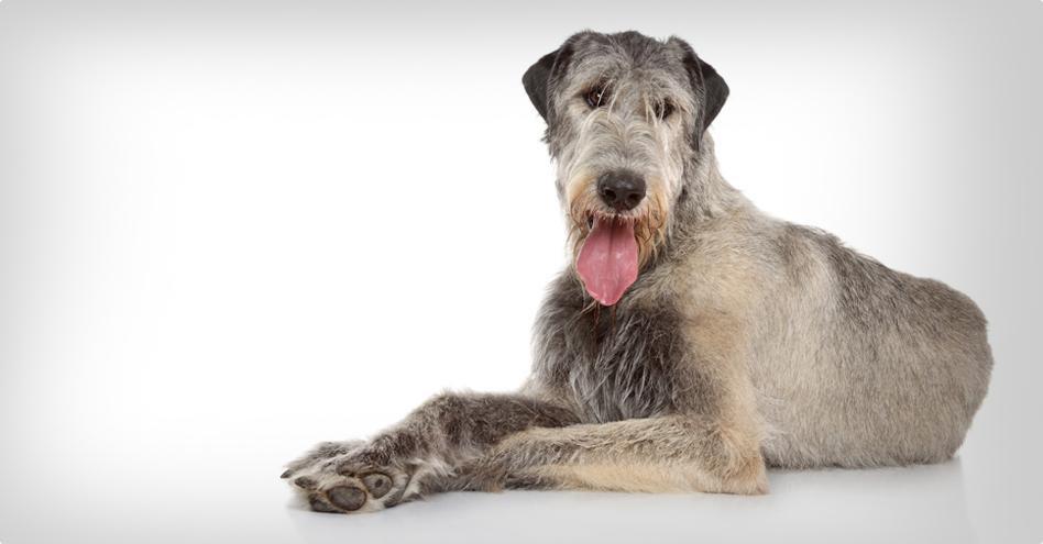 Obří pes zábal + hygiena