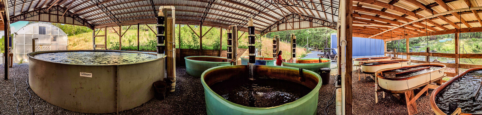 Ekvn-Yefolecv's aquaculture facility and greenhouse