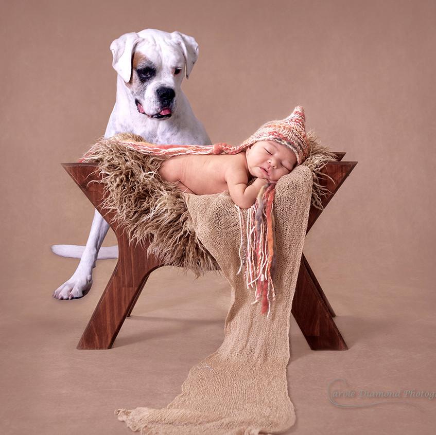 shire newborn photo with pet