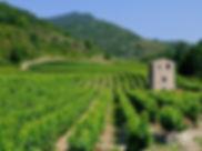 Drome-provencale-Les-vignobles-en-drome-