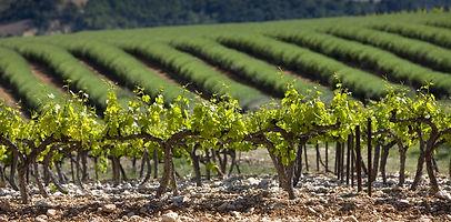 vinsobres2.jpg