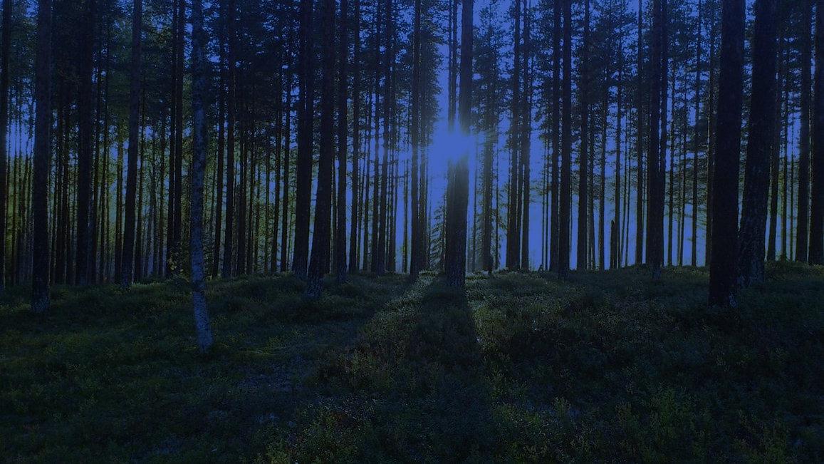 Forêt filtre 1.jpg