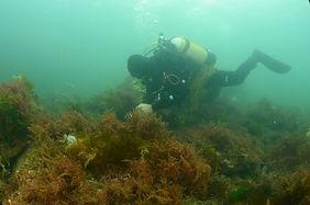 diver-and-asperagopsis.jpg