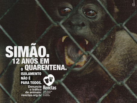 RENCTAS coloca em pauta o isolamento de diversos animais em uma campanha de combate ao tráfico.
