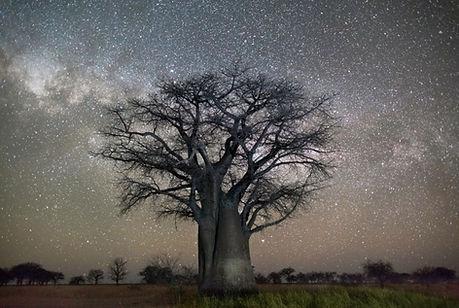 arbre étoile.jpg