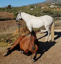 Horse Riding at Cortijo el Chenil Rural Retreat