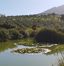 Fishing Lake, Cortijo el Chenil Rural Retreat