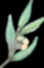 Green_leaf_buds.png