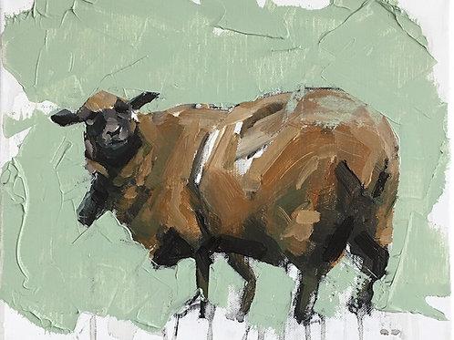 """Sheep study"""