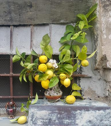 Limoni per dipingere.jpg