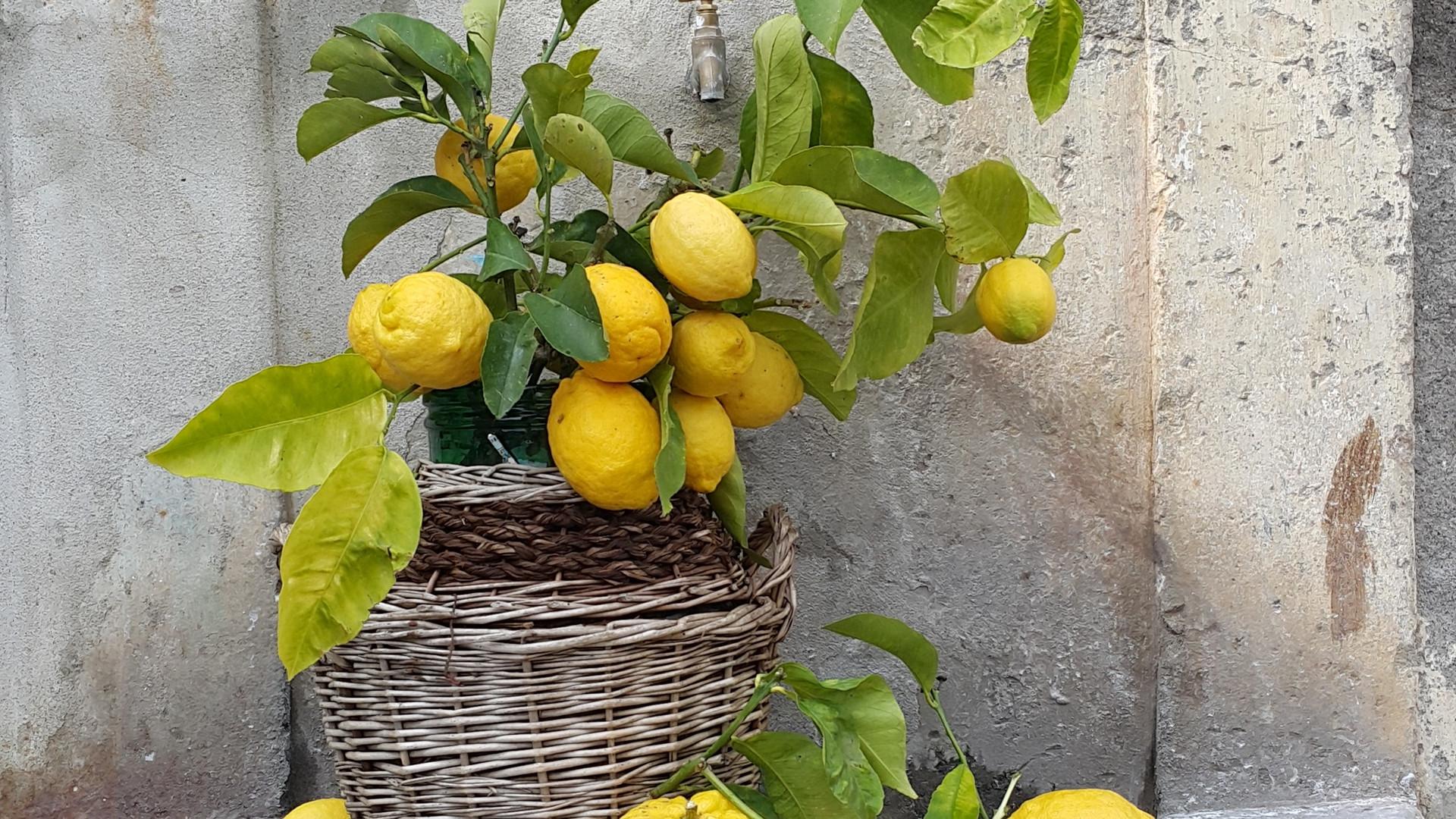 Limoni Liguri.jpg