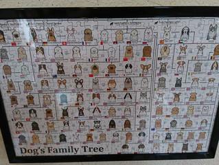 犬の家系図✨